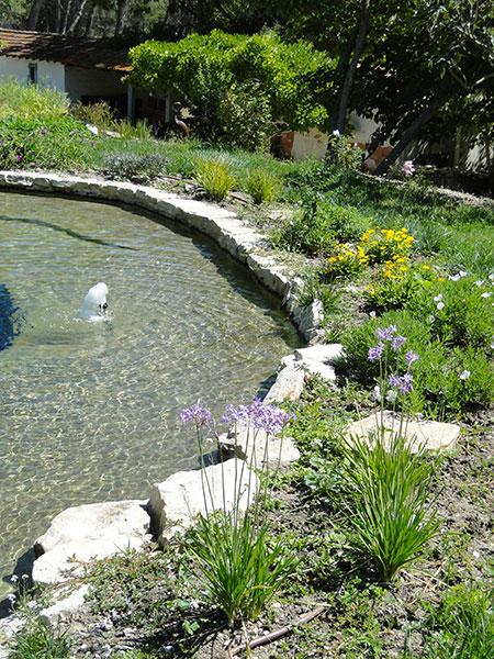 Jeux d 39 eau jardin paysagistes paysagiste architecte paysagiste milieu cr ant propose - Plantes bassin de lagunage aixen provence ...