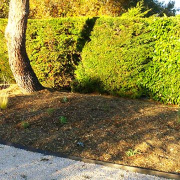 alternative gazon residentiel avant les gazons durables belanger alternative gazon en jardin. Black Bedroom Furniture Sets. Home Design Ideas